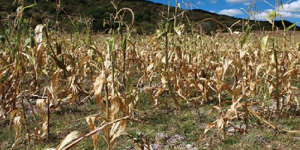 Poliducto: la solucion contra la Sequía y cambio climático.